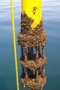 aquaculture-fig4