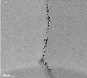un brote de alfalfa con nanopartículas de plata