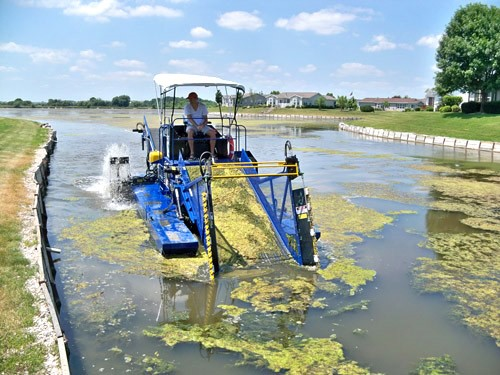 La cultivación de algas