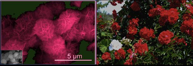 Dioxido de manganeso y rosas