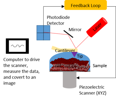 El esquema muestra los diferentes componentes de un AFM.